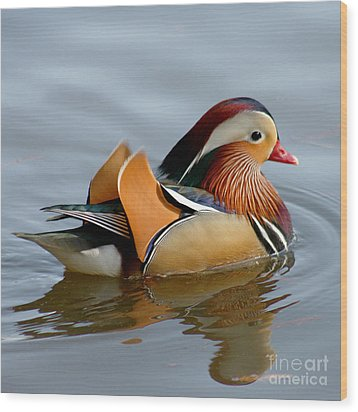 Wood Print featuring the photograph Mandarin Duck Swimming by Bob and Jan Shriner