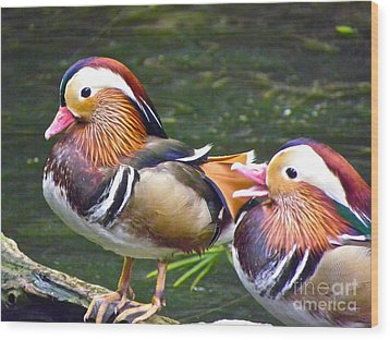 Mandarin Ducks Wood Print by Eve Spring