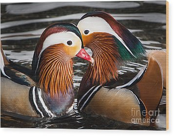 Mandarin Lovers Wood Print