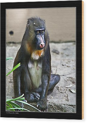 Wood Print featuring the photograph Mandril by Pedro L Gili