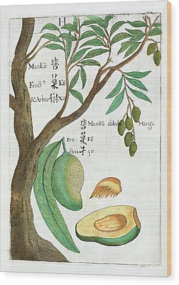 Mango Tree And Fruit Wood Print by Natural History Museum, London