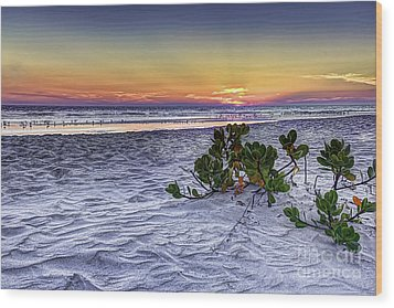 Mangrove On The Beach Wood Print by Marvin Spates