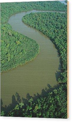 Mangrove Rhizophora Sp In Mahakam Delta Wood Print by Cyril Ruoso