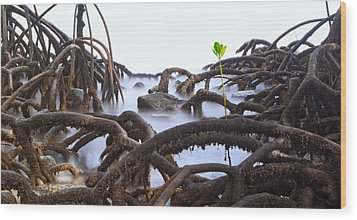 Mangrove Tree Roots Detail Wood Print by Dirk Ercken