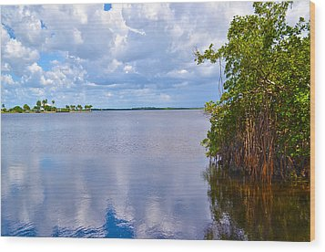 Wood Print featuring the photograph Mangroves In Matlacha Florida by Timothy Lowry