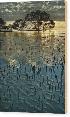 Mangroves Wood Print by Robert Charity