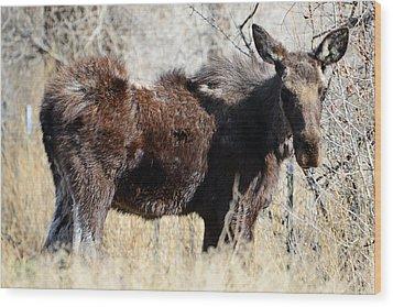 Mangy Moose Wood Print