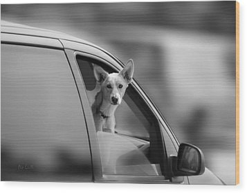 Mans Best Friend Riding Shotgun Wood Print by Bob Orsillo