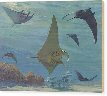 Manta Ray Wood Print by ACE Coinage painting by Michael Rothman