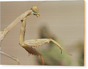 Mantis On The Hunt Wood Print by Shoal Hollingsworth