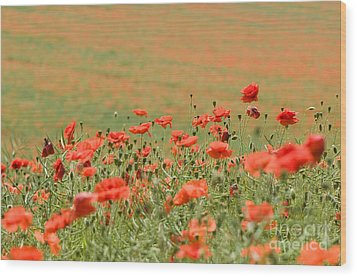 Many Poppies Wood Print by Anne Gilbert