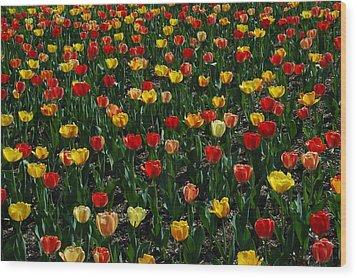 Many Tulips Wood Print by Raymond Salani III