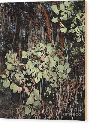 Manzanita Wood Print