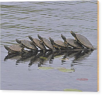 Map Turtles Wood Print by Tony Beck