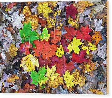 Wood Print featuring the photograph Maple Carpet by Jackie Carpenter