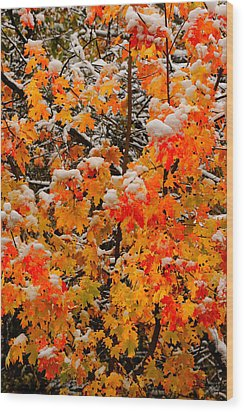 Maple Glow Limited Edition Wood Print