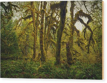 Maple Grove Wood Print