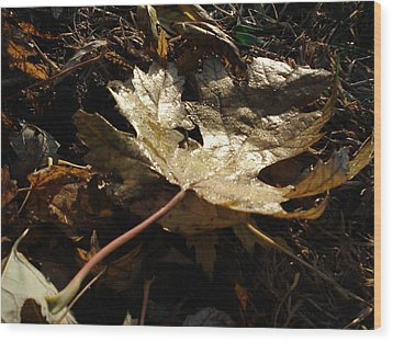 Wood Print featuring the photograph Maple Leaf by J L Zarek