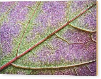 Maple Leaf Macro Wood Print by Adam Romanowicz