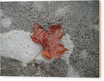 Maple Leaf Under Ice Wood Print by Carolyn Reinhart