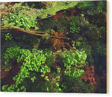 Maple Leaves And Watercress Wood Print by Robin Street-Morris