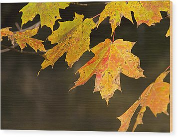 Maple Leaves In Autumn Wood Print by Larry Bohlin