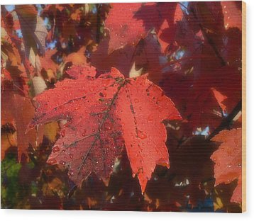 Maple Leaves In Autumn Red Wood Print by MM Anderson