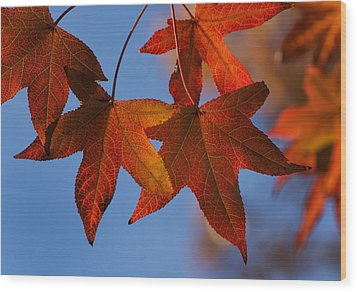 Maple Leaves In The Fall Wood Print by Stephen Anderson