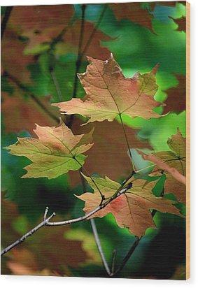 Maple Leaves In The Shadows Wood Print by Rosanne Jordan