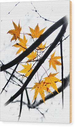 Maple Leaves Wood Print by Jonathan Nguyen