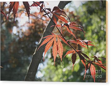 Maple On Pine Wood Print by Paul Cammarata