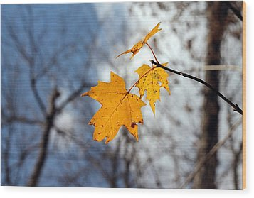 Maple On The Blue Wood Print by Abril Gonzalez