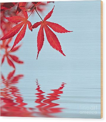 Maple Reflection Wood Print