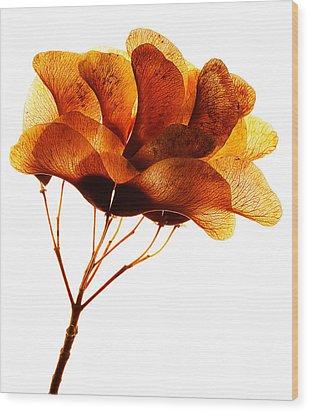 Maple Seed Pod Cluster Wood Print
