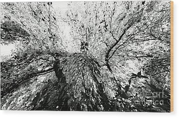 Wood Print featuring the photograph Maple Tree Inkblot by CML Brown