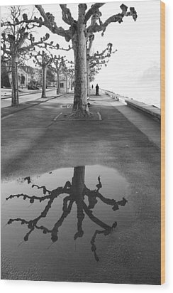 Maples Along Quai Perdonnet Wood Print