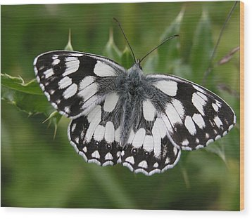 Marbled White Wood Print by Ron Harpham