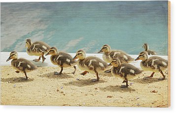 March Of The Ducklings Wood Print by Fraida Gutovich
