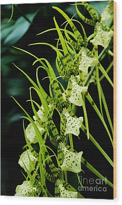 Wood Print featuring the photograph Marching Orchids by Eva Kaufman