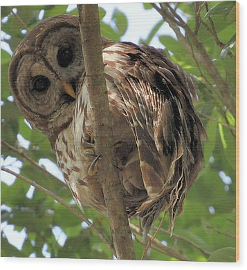 Wood Print featuring the photograph Marcus' Backyard Hooter by AnnaJo Vahle