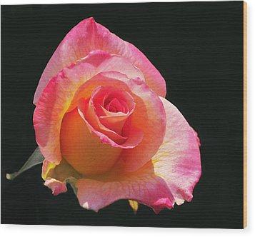 Mardi Gras Floribunda Rose Wood Print by Rona Black