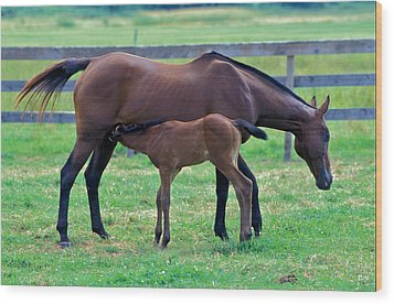 Mare And Foal Wood Print by Gail Maloney