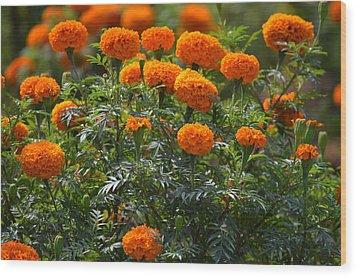 Marigold Flowers  Wood Print by Johnson Moya