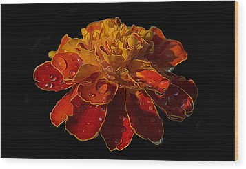 Marigold Tagetes Wood Print by Michael Moriarty