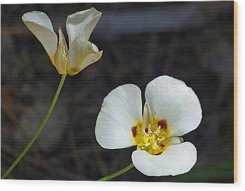 Mariposa Lilies Wood Print