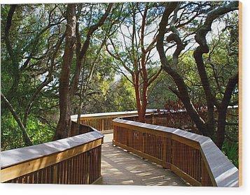 Maritime Forest Boardwalk Wood Print by Kathryn Meyer