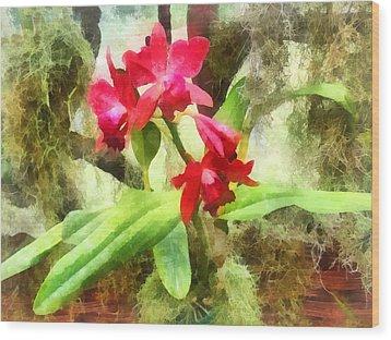 Maroon Cattleya Orchids Wood Print by Susan Savad