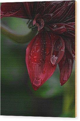 Maroon Dahlia Drips Wood Print