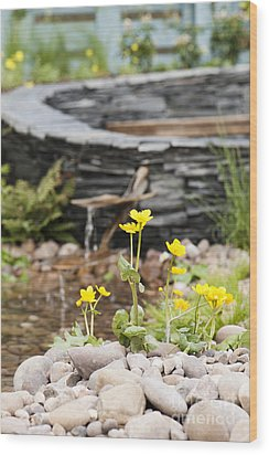 Marsh Marigolds Wood Print by Anne Gilbert