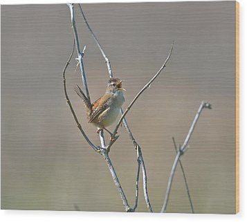 Marsh Wren Wood Print by Kathy King